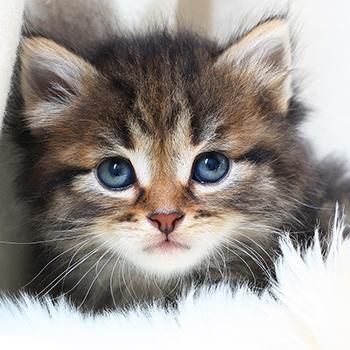 Relativ Adoption d'un chaton | Centre Vétérinaire Laval EO77