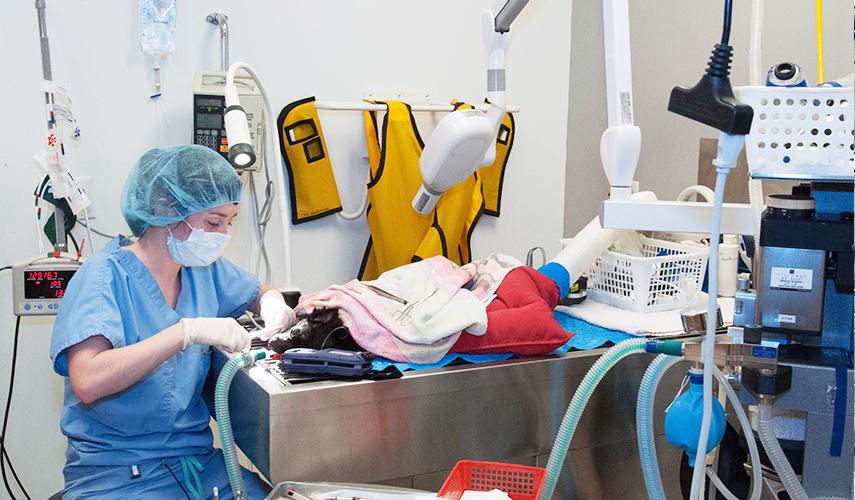 Dentistry | Centre Vétérinaire Laval